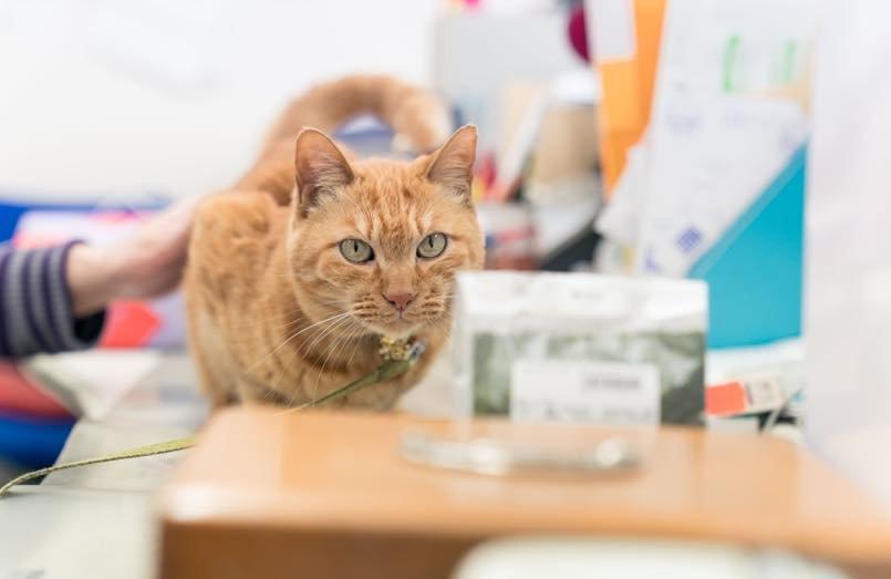 オフィスで愛嬌をふりまく、看板猫のみかんちゃん